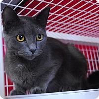 Adopt A Pet :: Alora - Winchendon, MA