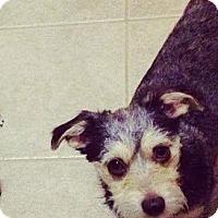Adopt A Pet :: Rask - Grafton, MA