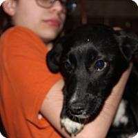 Adopt A Pet :: Nancy - Harmony, Glocester, RI