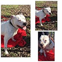 Adopt A Pet :: Boudreaux - Madisonville, TX
