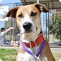 Adopt A Pet :: Freddy - Stillwater, OK