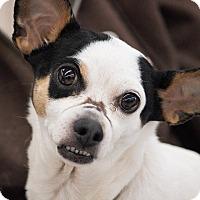 Adopt A Pet :: Toby - Lansing, MI