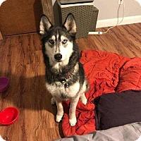 Adopt A Pet :: Luna - Matawan, NJ