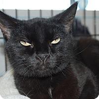 Adopt A Pet :: Betty (LV) - Exton, PA