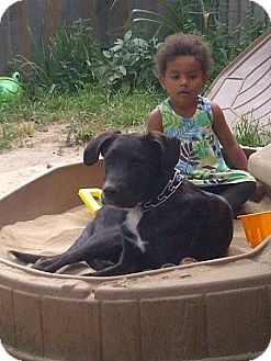 Great Dane Mix Puppy for adoption in Northumberland, Ontario - Seven