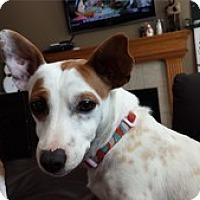 Adopt A Pet :: Chloe - Shawnee Mission, KS