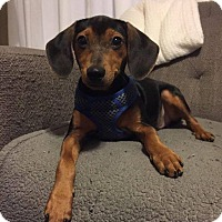 Adopt A Pet :: Rupert - Chicago, IL