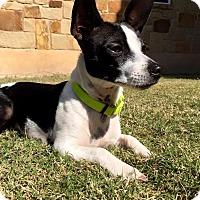 Adopt A Pet :: Willie In Austin - San Antonio, TX