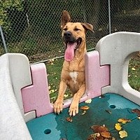 German Shepherd Dog/Coonhound Mix Dog for adoption in Vineland, New Jersey - Rosie