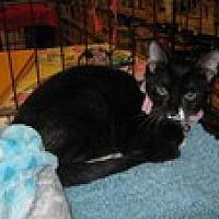 Adopt A Pet :: Nina - Arlington, TX