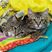 Adopt A Pet :: Ella - Satellite Beach, FL