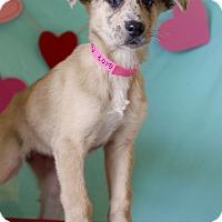 Adopt A Pet :: Capri - Waldorf, MD