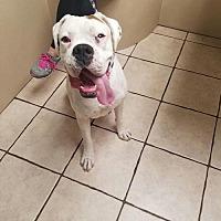 Adopt A Pet :: Larry - Las Vegas, NV