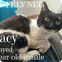 Adopt A Pet :: Lacey - Breinigsville, PA