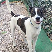 Adopt A Pet :: Jax - Boca Raton, FL