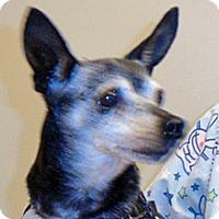 Adopt A Pet :: Ellie - Wildomar, CA