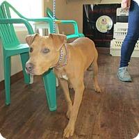 Adopt A Pet :: Addie - St. Charles, MO