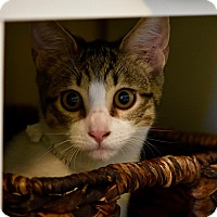 Adopt A Pet :: Audi - Lakeland, FL