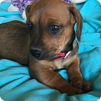 Adopt A Pet :: RONA - East Windsor, CT