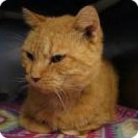 Adopt A Pet :: Viggo - New Milford, CT