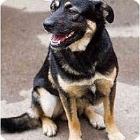 Adopt A Pet :: Bjorn - Portland, OR