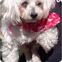 Adopt A Pet :: Trisha - Houston, TX