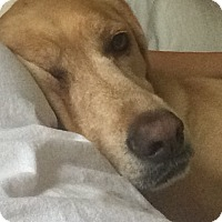 Adopt A Pet :: Dexter - Lewisville, IN