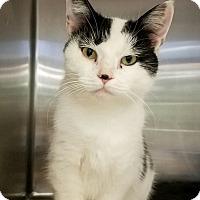 Adopt A Pet :: Francesca - Elyria, OH