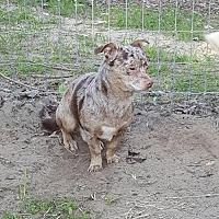 Adopt A Pet :: Jack - Gretna, FL