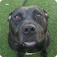 Adopt A Pet :: Misha - Fort Myers, FL