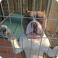 Adopt A Pet :: Rex - Covington, TN