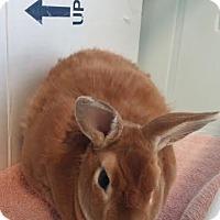 Adopt A Pet :: Sunny Boy - Reisterstown, MD