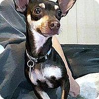 Adopt A Pet :: Jake - Tijeras, NM