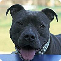 Adopt A Pet :: Harper - Kansas City, MO