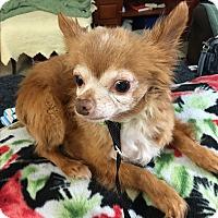 Adopt A Pet :: Eddie - Astoria, NY