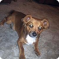 Adopt A Pet :: Miko - Costa Mesa, CA