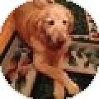 Adopt A Pet :: Kelly - Denver, CO