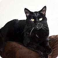 Adopt A Pet :: Sierra - Xenia, OH