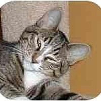 Adopt A Pet :: Neville - Portland, OR