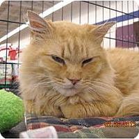 Adopt A Pet :: Sampson - Riverside, RI