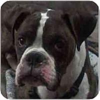 Adopt A Pet :: Buddy - Grafton, MA