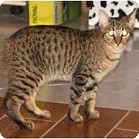 Adopt A Pet :: Rupert - Orlando, FL