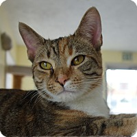 Adopt A Pet :: Lolita - Greenfield, IN
