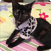 Adopt A Pet :: Shirley - Avon Park, FL