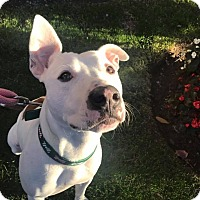 Adopt A Pet :: GUNNER - Cliffside Park, NJ
