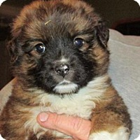 Adopt A Pet :: Steve - Rocky Mount, NC