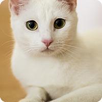 Adopt A Pet :: Vera - Chicago, IL