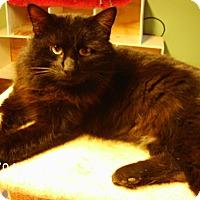Adopt A Pet :: Valentine - Bridgeton, MO