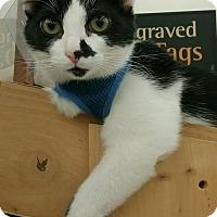 Adopt A Pet :: Bruce - Columbus, OH