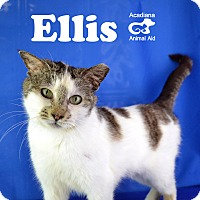 Adopt A Pet :: Ellis - Carencro, LA